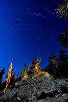52 Minute Startrail in Bristlecone Forest