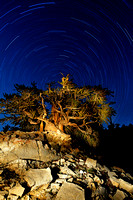 70 Minute Startrail in Bristlecone Forest